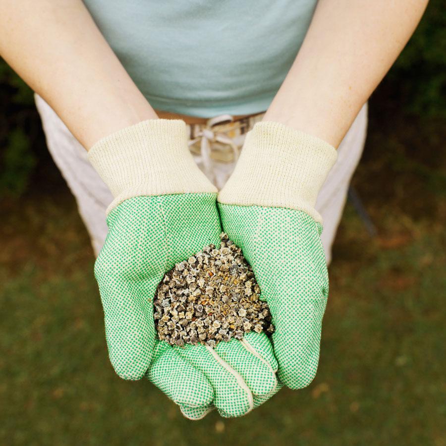 Как хранить семена зимо