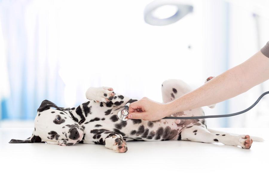 Как выявить мошенническую ветеринарную клинику винтернете?