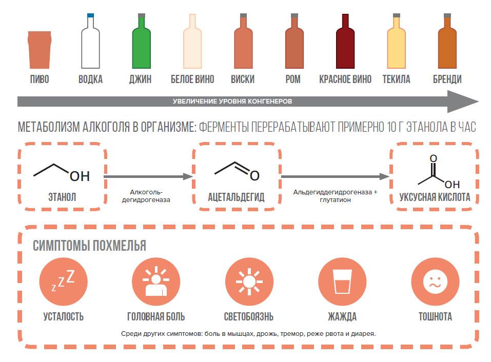 Как организм перерабатывает алкоголь