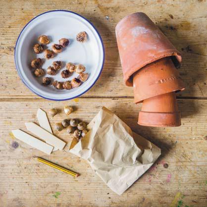 Выгонка луковиц вдомашних условиях