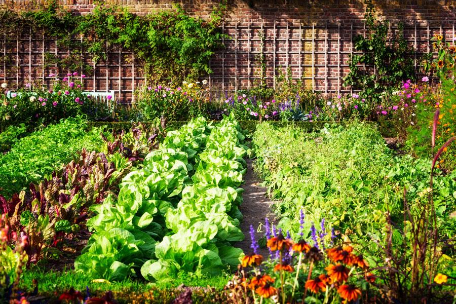 Для защиты растений отвредителей иболезней