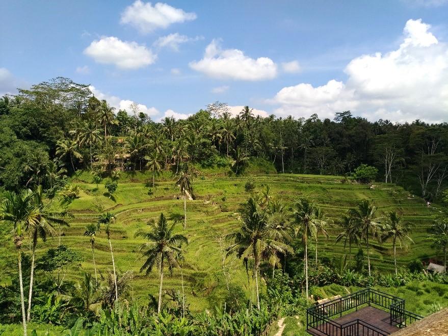 Природа Бали: горы, джунгли, водопады ирис!