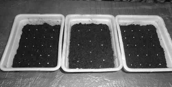 Раскладка семян