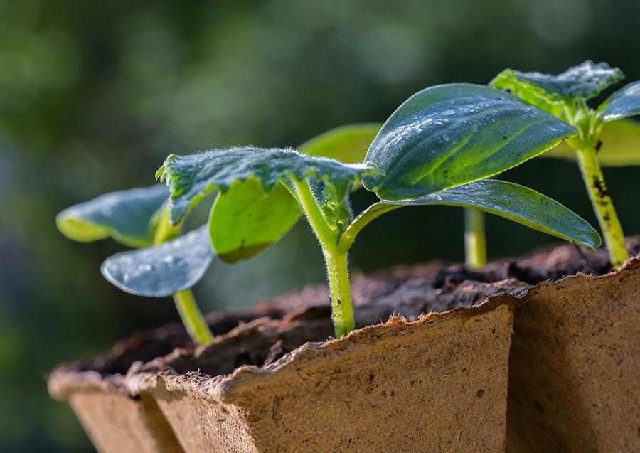 Как ухаживать зарассадой измелких семян: полив