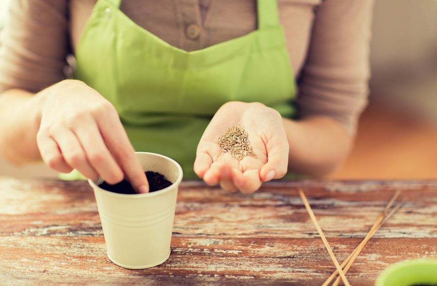 Как обычно сеют мелкие семена нарассаду