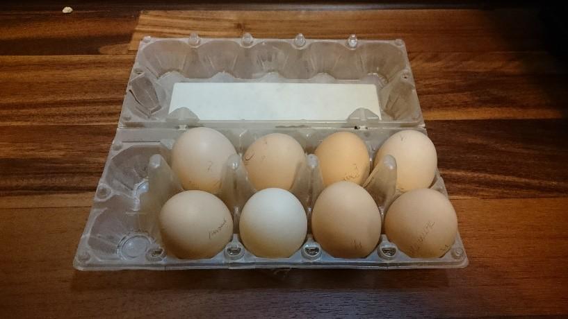 Подготовка квыведению цыплят