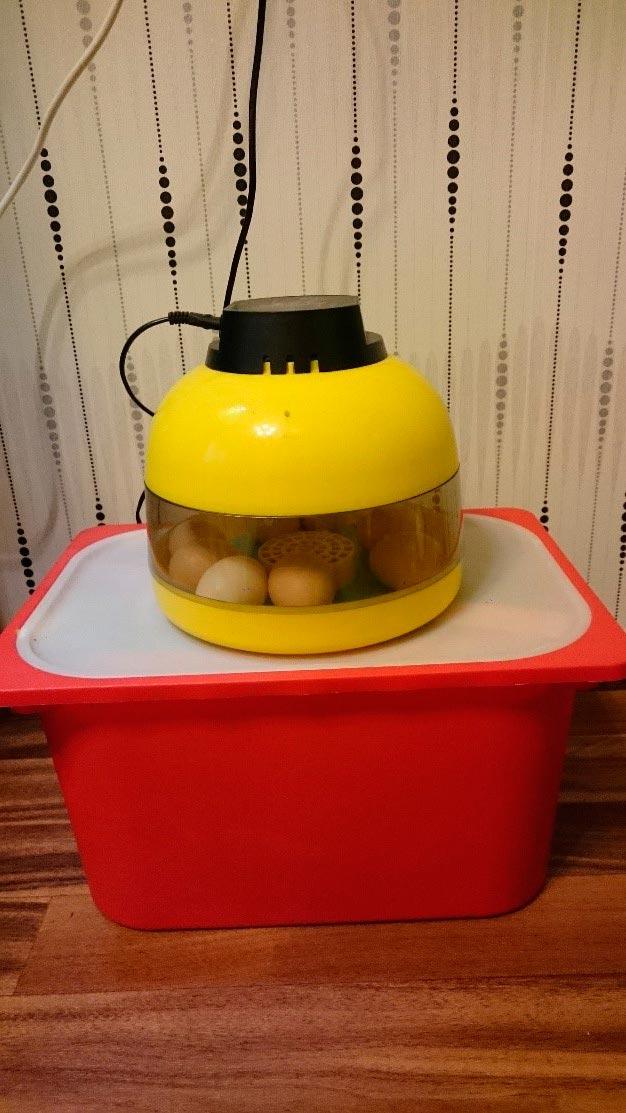 Инкубация инаблюдение заяйцами