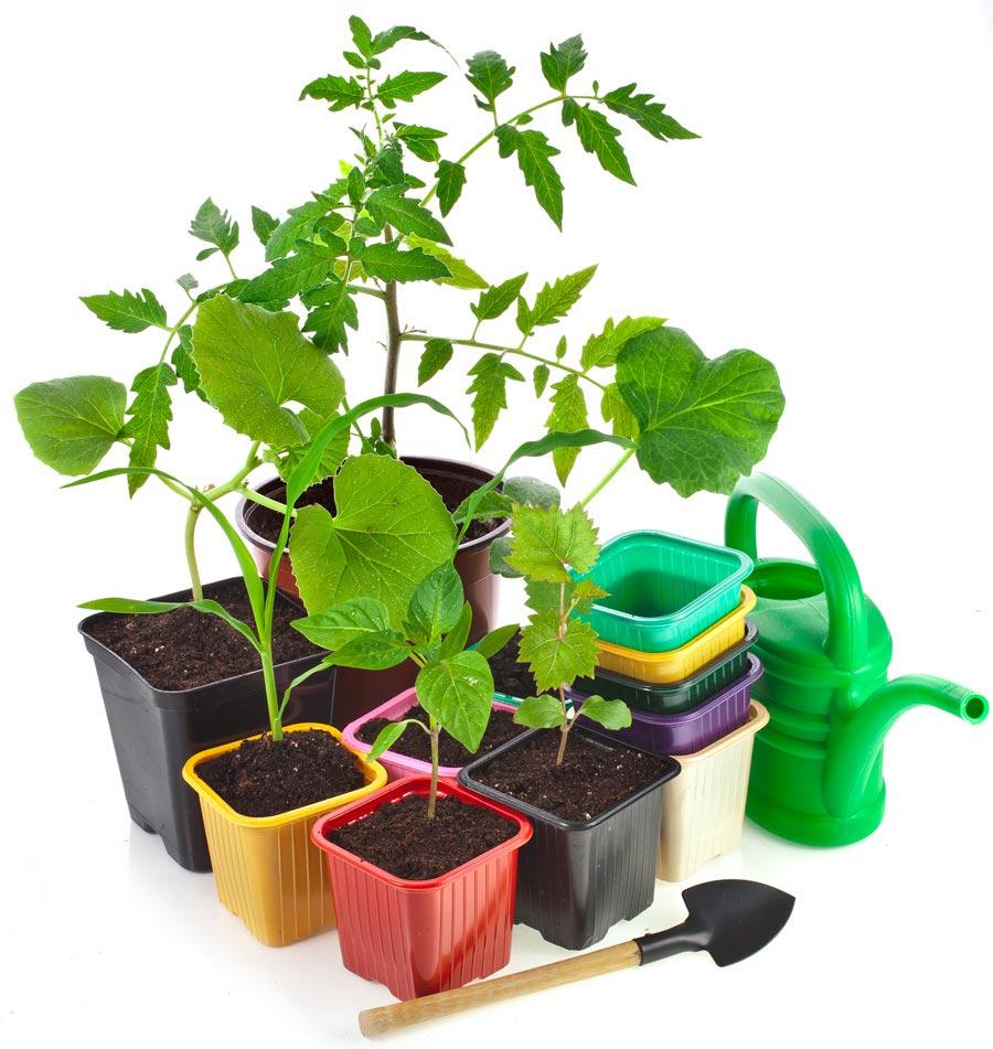 Условия выращивания рассады. Как поддерживать температурный режим для рассады