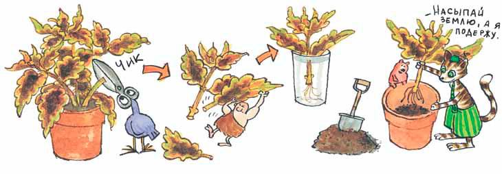 Как размножать ипересаживать комнатные растения