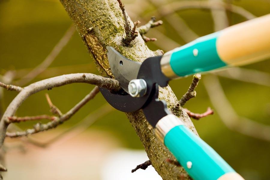 Сроки обрезки деревьев весной