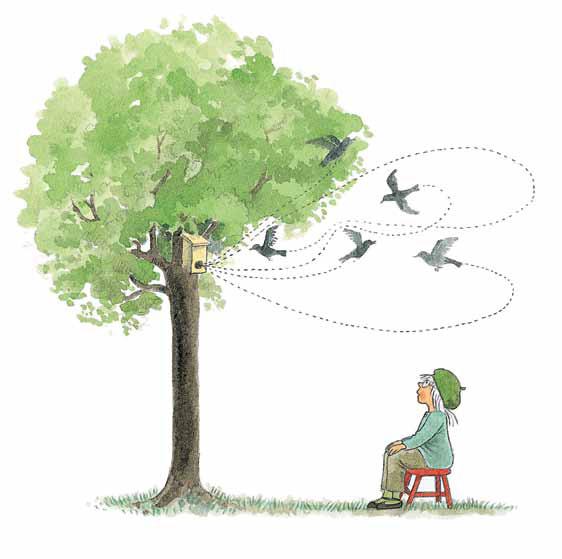 Как птицы выводят птенцов