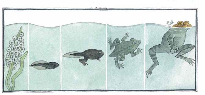 Когда наблюдать залягушками