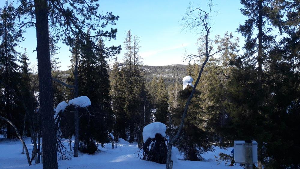 Лыжный сезон В Рука