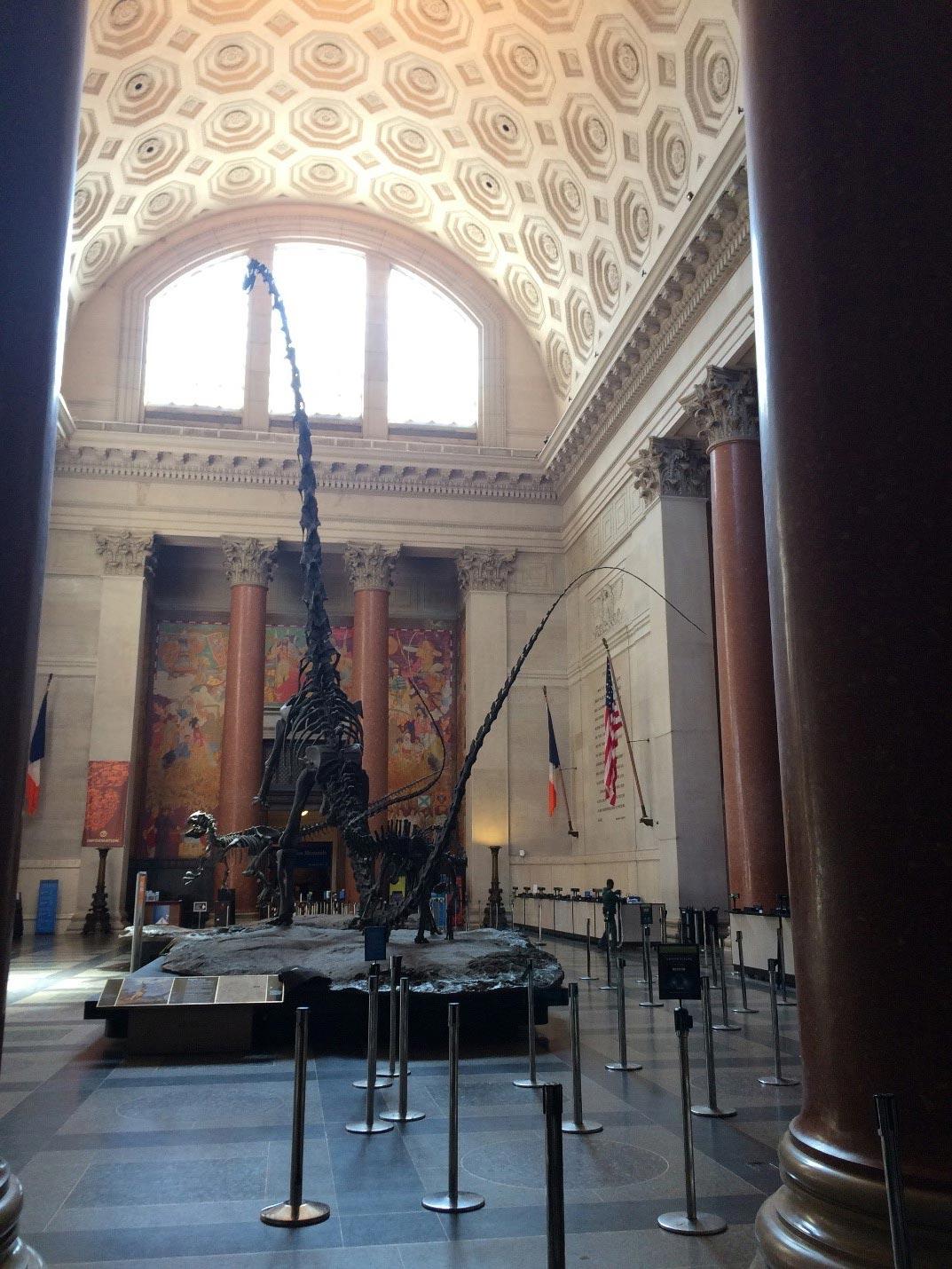 Американский музей естественной истории (American Museum ofNatural History)