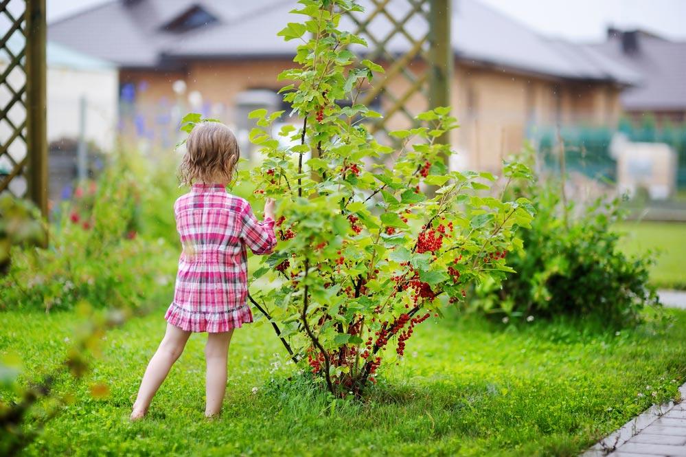 Борьба сплодожоркой, малинной галлицей, яблоневым цветоедом