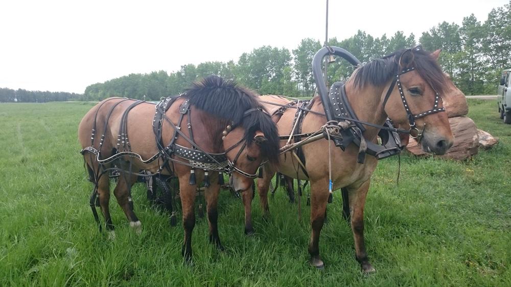 Катание натройке ипосещение конюшни
