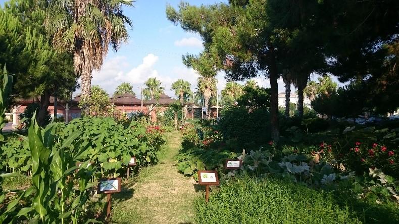 Органический огород ичерепашьи яйца
