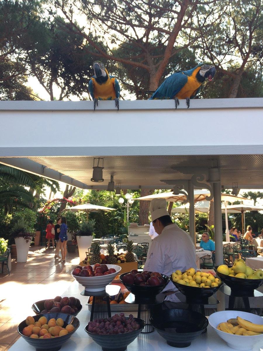 Штатные работники отеля извезды рекламного ролика Forte Villge— два роскошных попугая— встречают гостей назавтраке