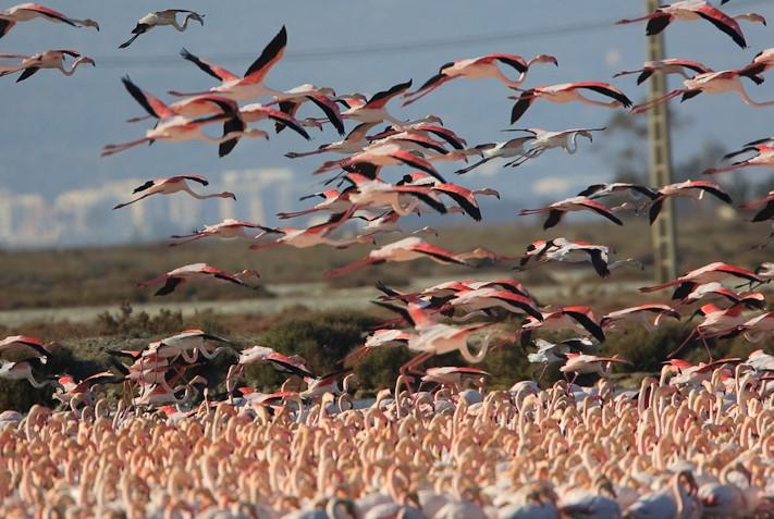 Испания: наблюдения за птицами