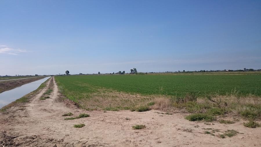 Велопрогулка посреди рисовых полей
