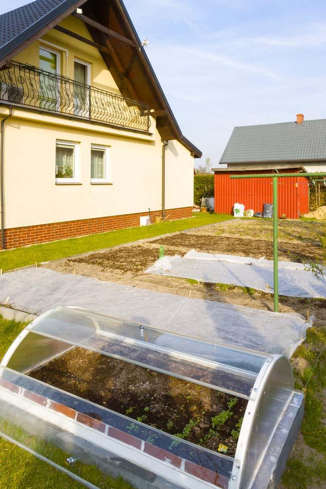 Где посадить кусты сягодами