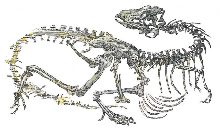 Ископаемые остатки горгозавра (длина около 9метров)