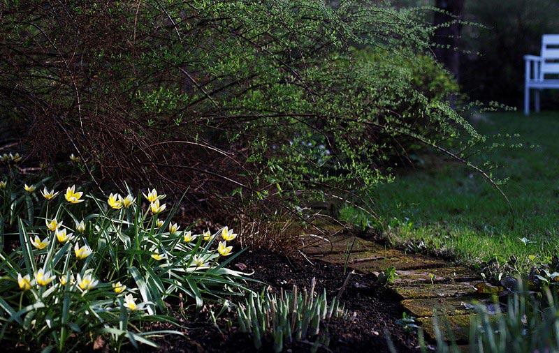 Тюльпаны весной