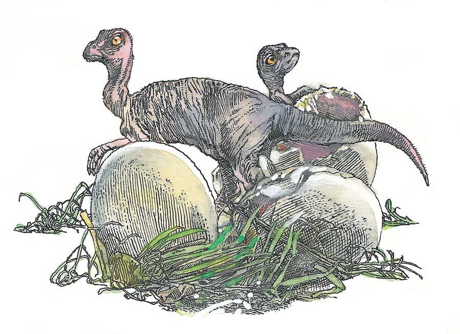 Естьли связь между кратером вМексике игибелью динозавров?