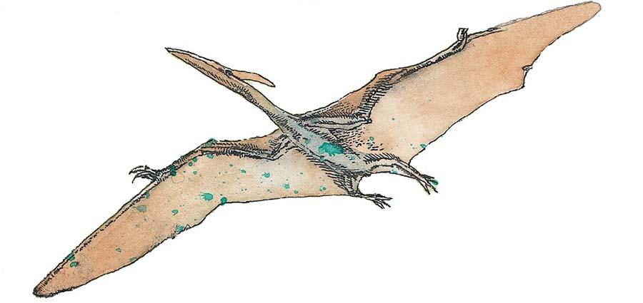 Неужели отдинозавров осталась лишь груда костей?