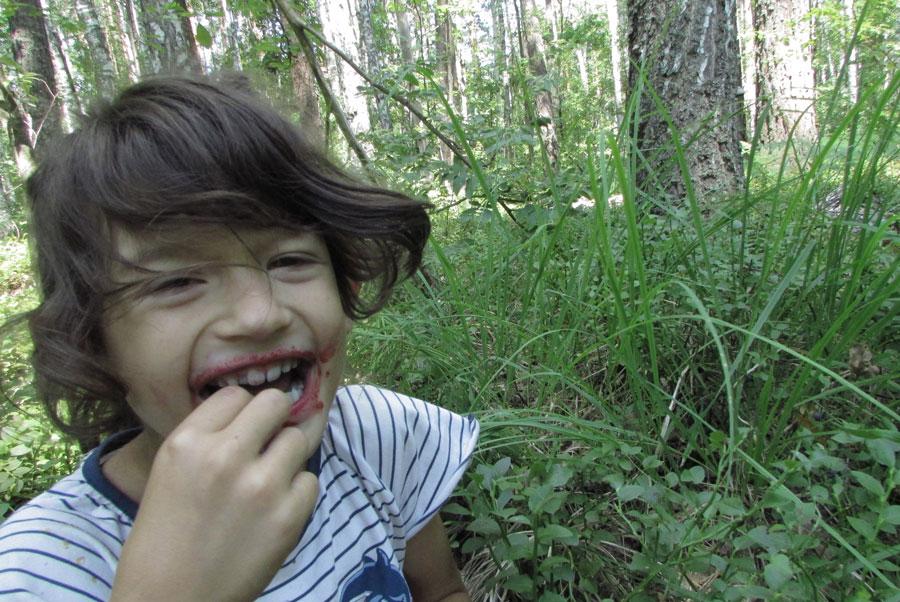 Виюле— всосновые леса счерникой ибобрами