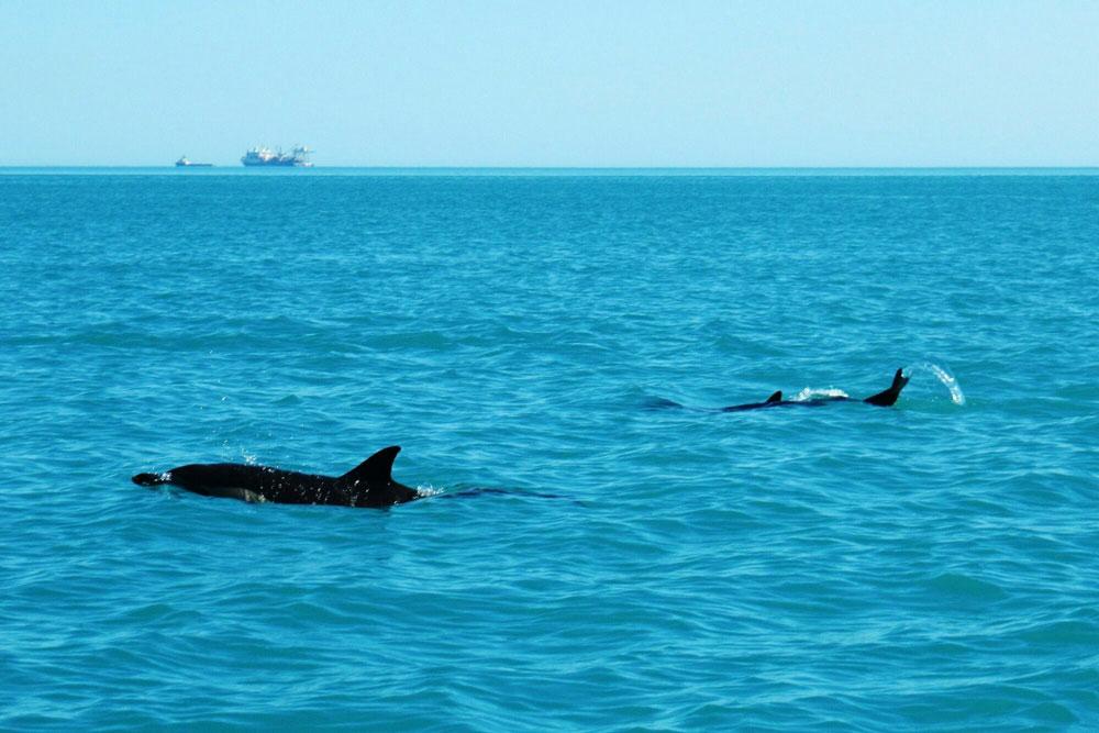Утриш дельфинарий