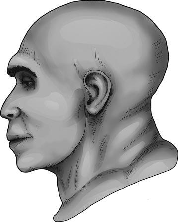 Реконструкция лица Сен-Сезер почерепу (автор Т.С. Балуева)