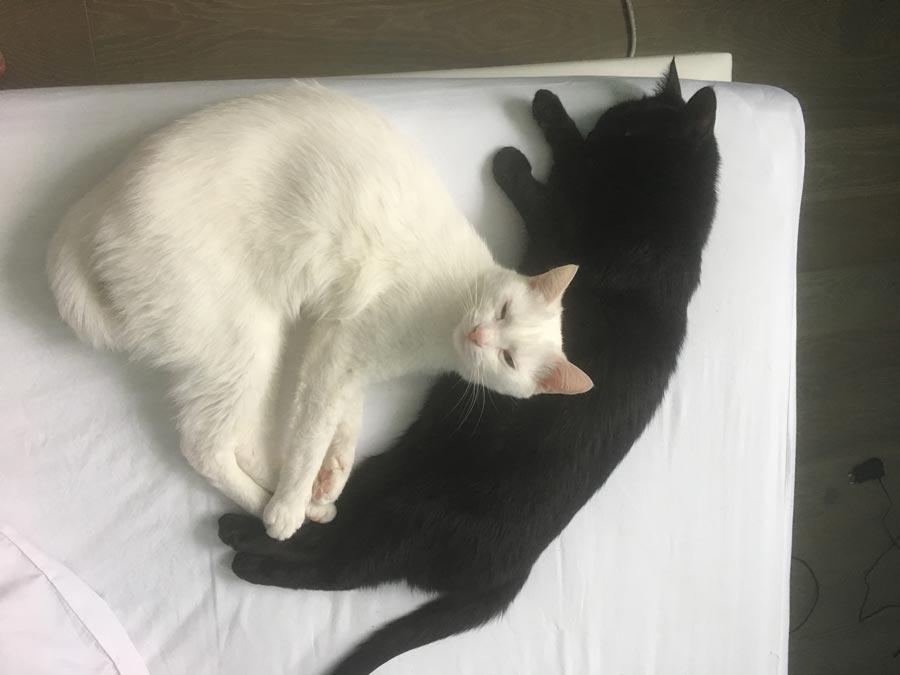 София и Белка