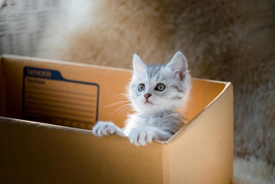 Без кота жизнь нета