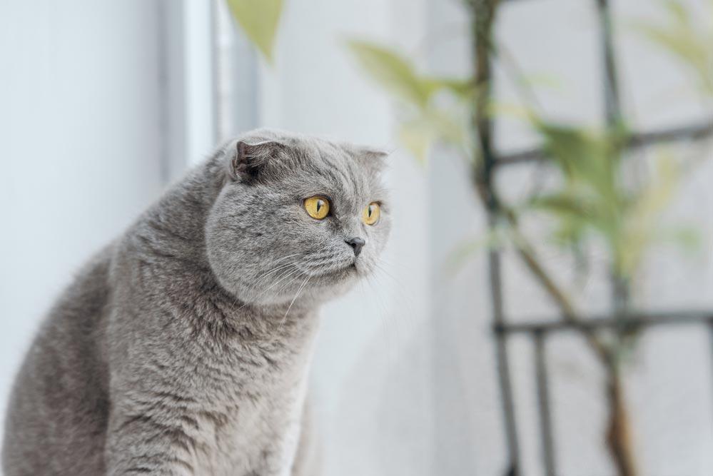 Полезные кошачьи повадки