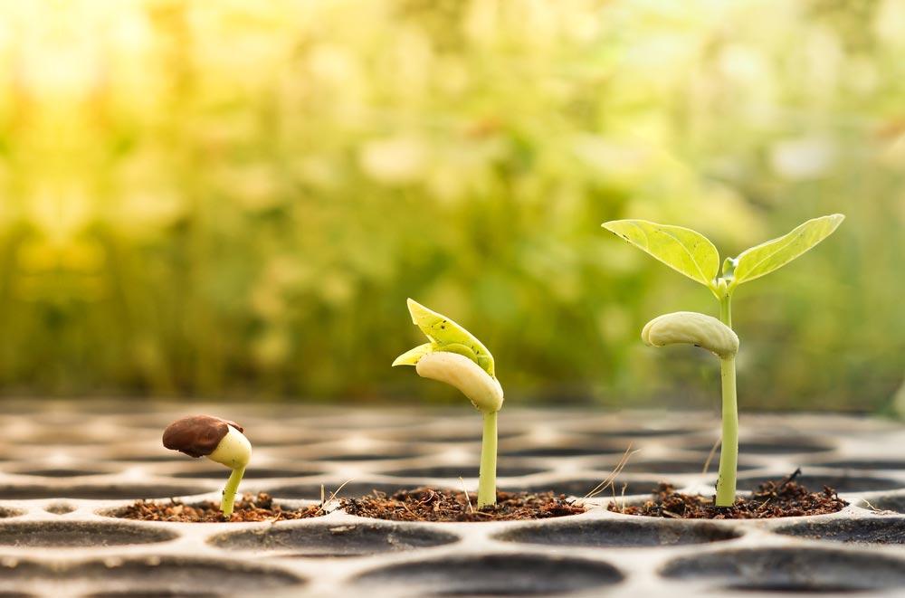 Почему япроращиваю семена для рассады
