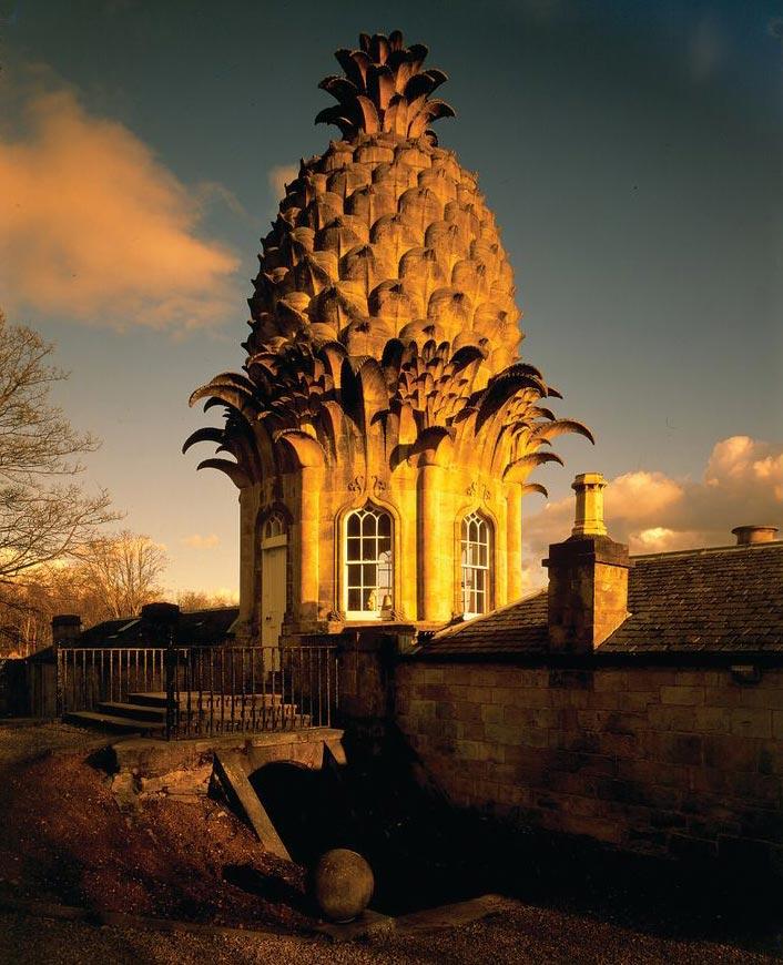 The Pineapple: остановиться вананасе