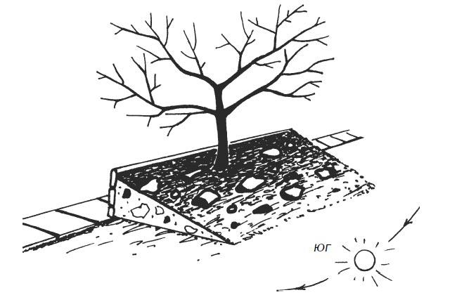 Искусственный склон свозможным наполнением изкамней увеличивает теплонакопление впочве
