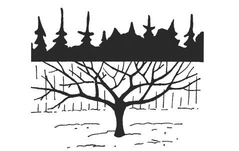 Лес ссеверной стороны хорошо защищает сад отвнезапного похолодания; глухой забор способствует накоплению отраженного тепла