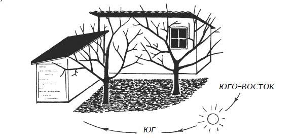 Деревья вкармане построек, где накапливается отраженное тепло, находятся ввыгодном положении