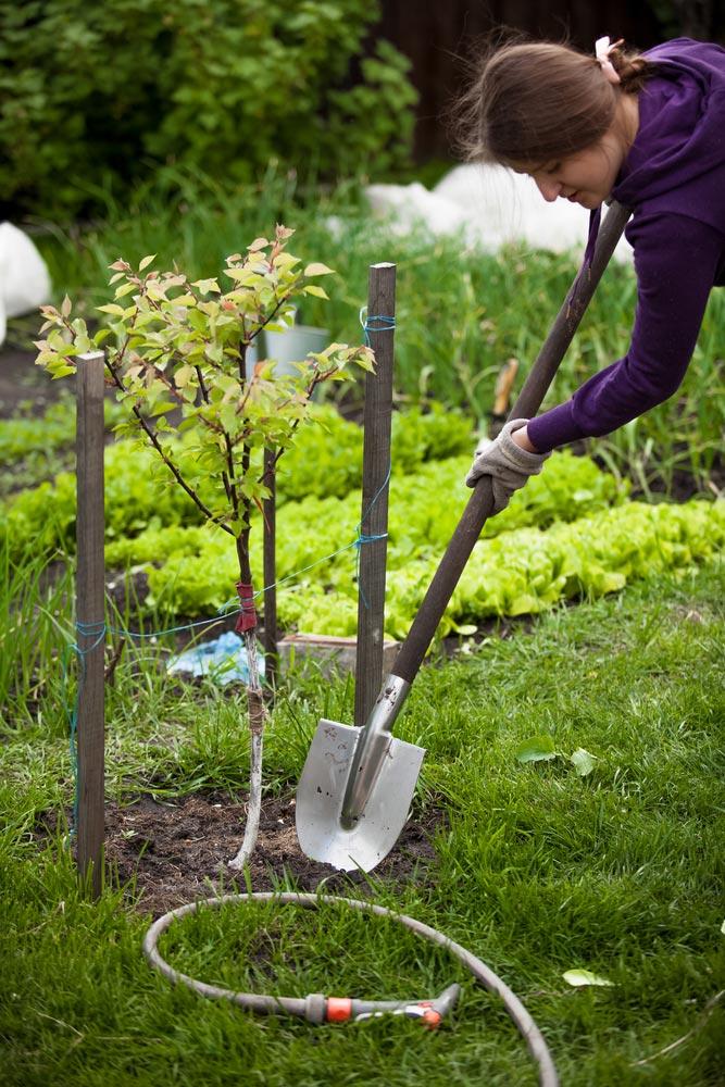 Как дать деревьям икустам надаче больше тепла