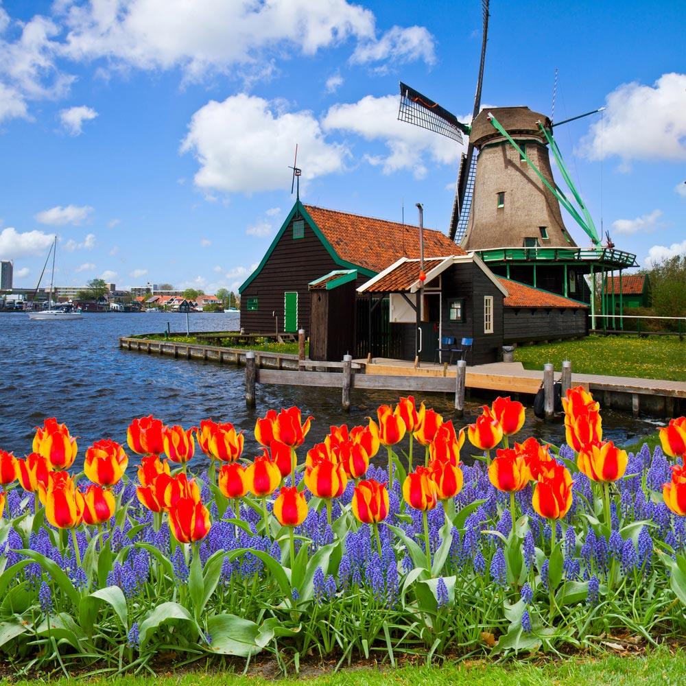 Почему вГолландии рожают дома