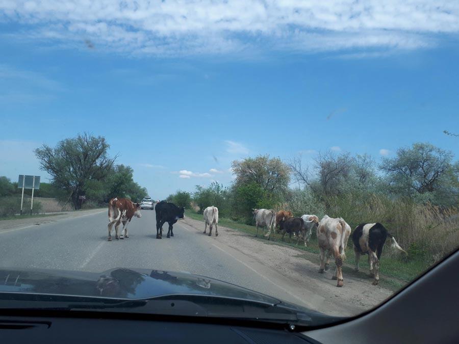 Дорога Москва-Астрахань намашине