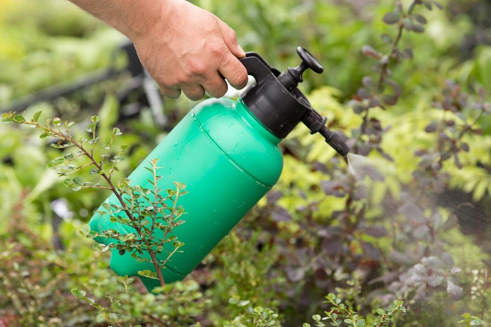 Безопасные препараты ля обработки сада весной и летом