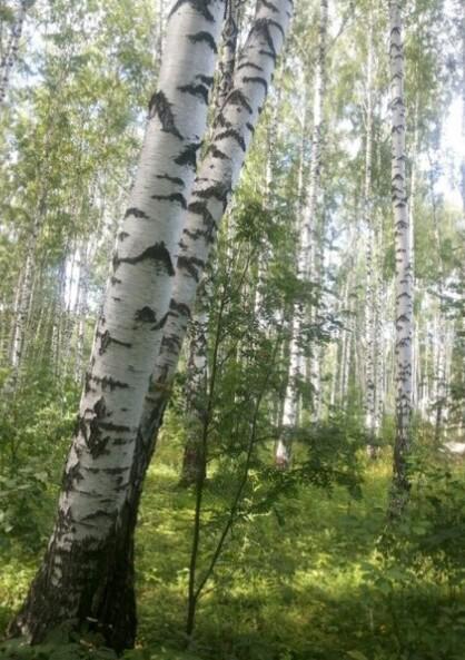 Лучший отдых – прогулки по лесу