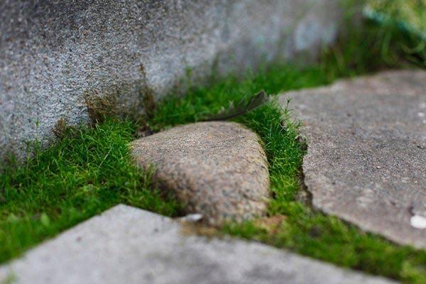 Описание и фото почвопокровных растений