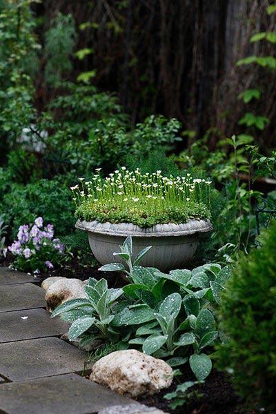 Мнголетние цветы для клумб и миксбордеров