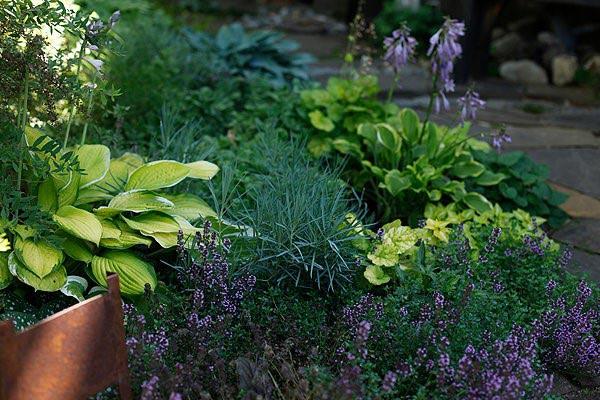 Почвопокровные растения для солнечных мест