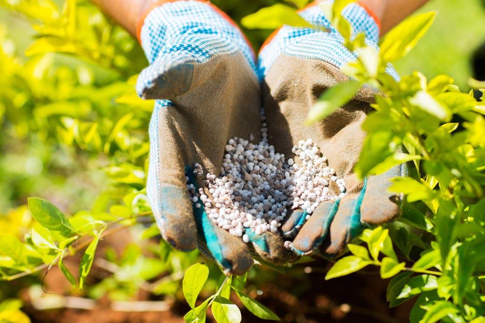 Почему фосфорные удобрения вносят осенью