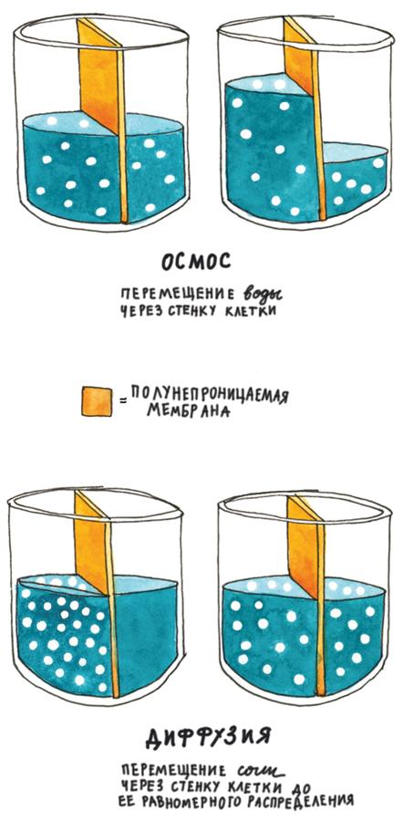 Как работает соль